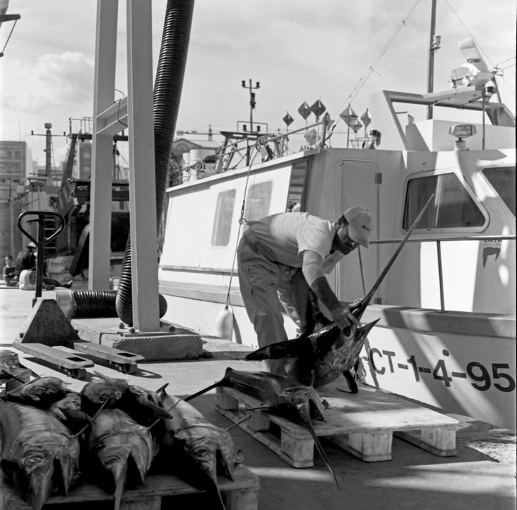 Andalusian fish market by Keith Moss. http://keithmoss.co.uk #ilford #film #keithmoss #fish