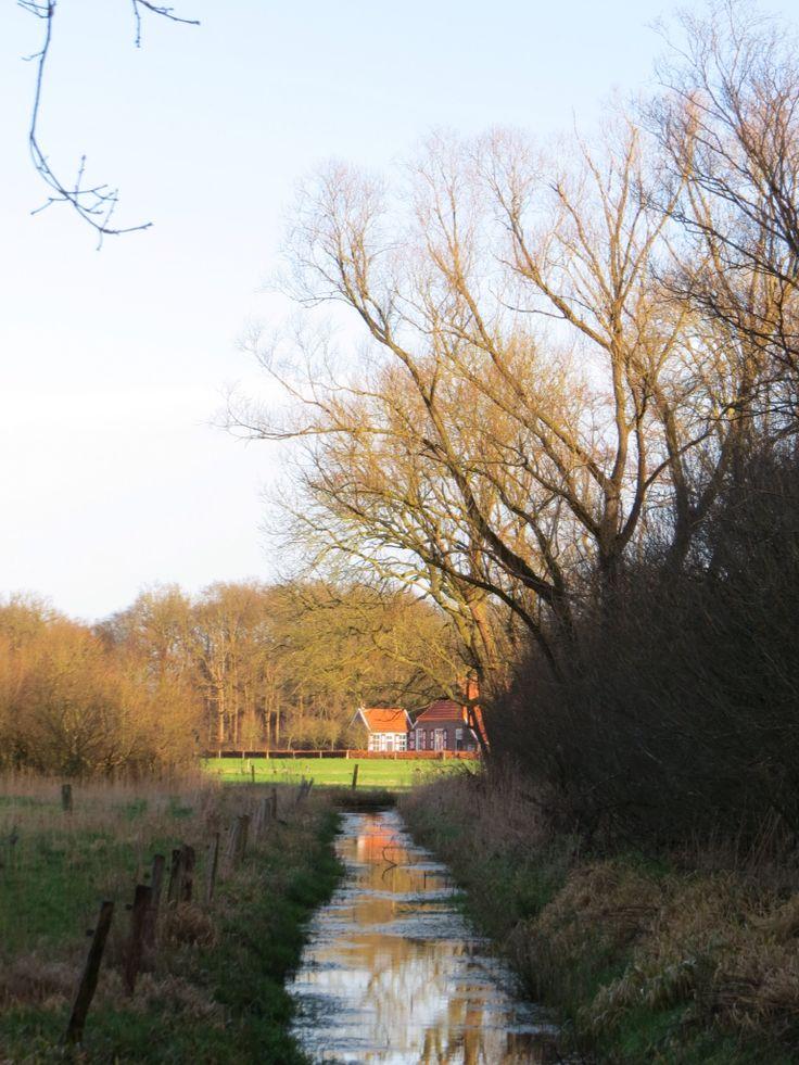 2016-01-10 Mooi doorkijkje vanaf het pad door het natte bos van Huize Diepenheim