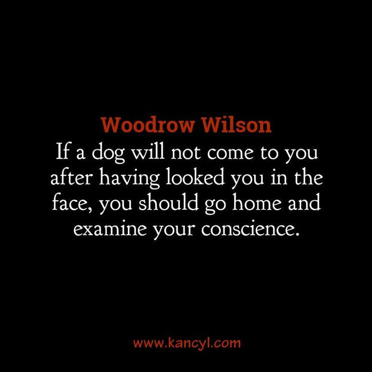 """If a dog will not come to you after having looked you in the face, you should go home and examine your conscience."", Woodrow Wilson"