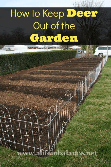 168 Best Organic Pest Control Images On Pinterest   Garden Pests, Gardening  Tips And Organic Gardening