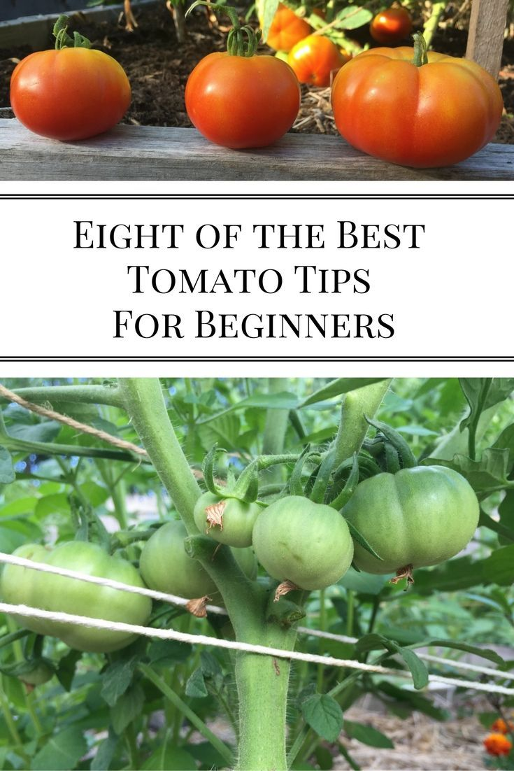 51 Best Images About Container Tomatoes On Pinterest 400 x 300