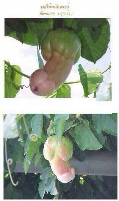 Dick in a plant creates futanaries 5