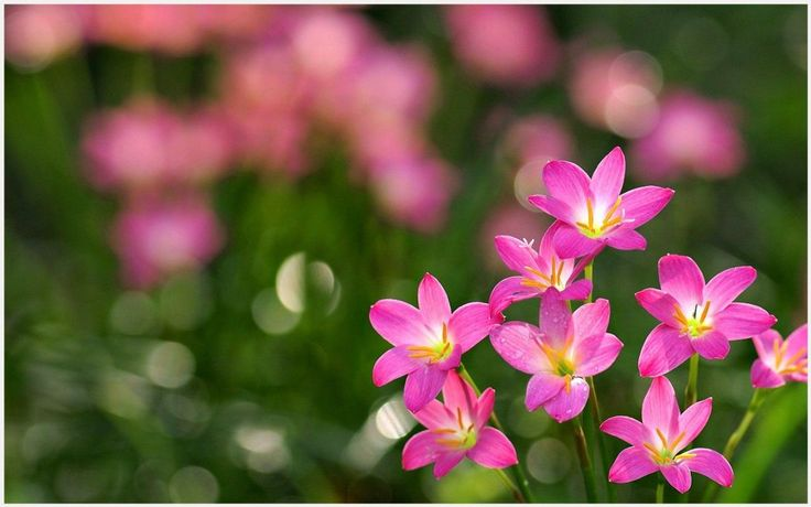 Little Pink Flowers Wallpaper | tiny pink flower wallpaper