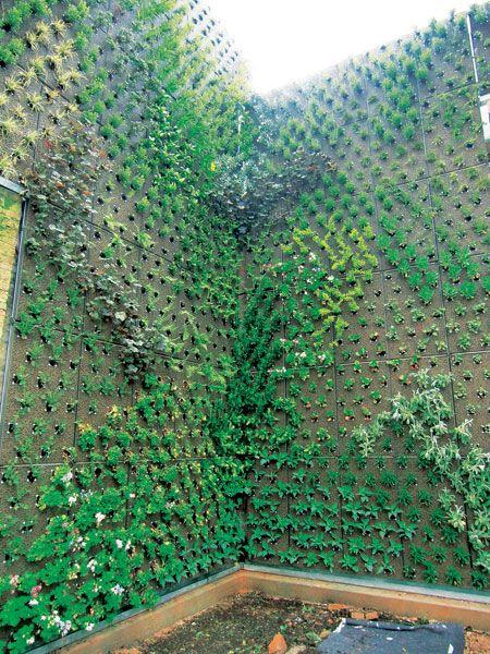 Vertikálne záhrady – vegetačné fasády 3