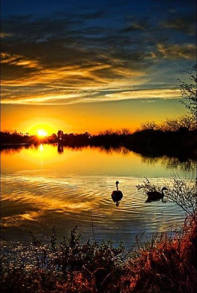 Beautiful sunset, cloudy sky, sunbeams, water, swans, peaceful, silence, beauty of Nature, stunning, photo