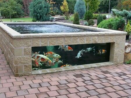 Best 25 koi ponds ideas on pinterest koi fish pond for Blue koi pond liner