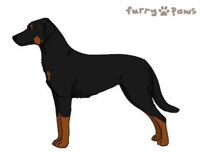 Furry Paws // WCT Kip's Hop, Step, Jump de [Lla 3STM 17HH 1.590] *BoB*x12's Kennel