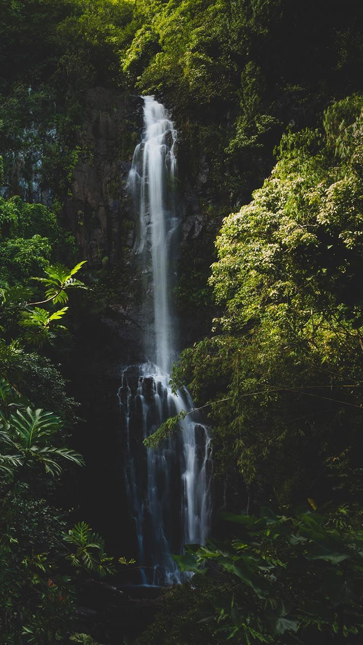 Welcome To The Jungle Iphone Xs Max Wallpapers Nature Iphone Wallpaper Jungle Wallpaper Forest Wallpaper Iphone