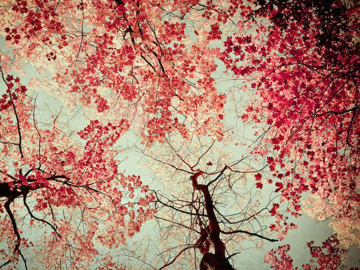 Beautifully enchanting nature photos by Joy St. Claire