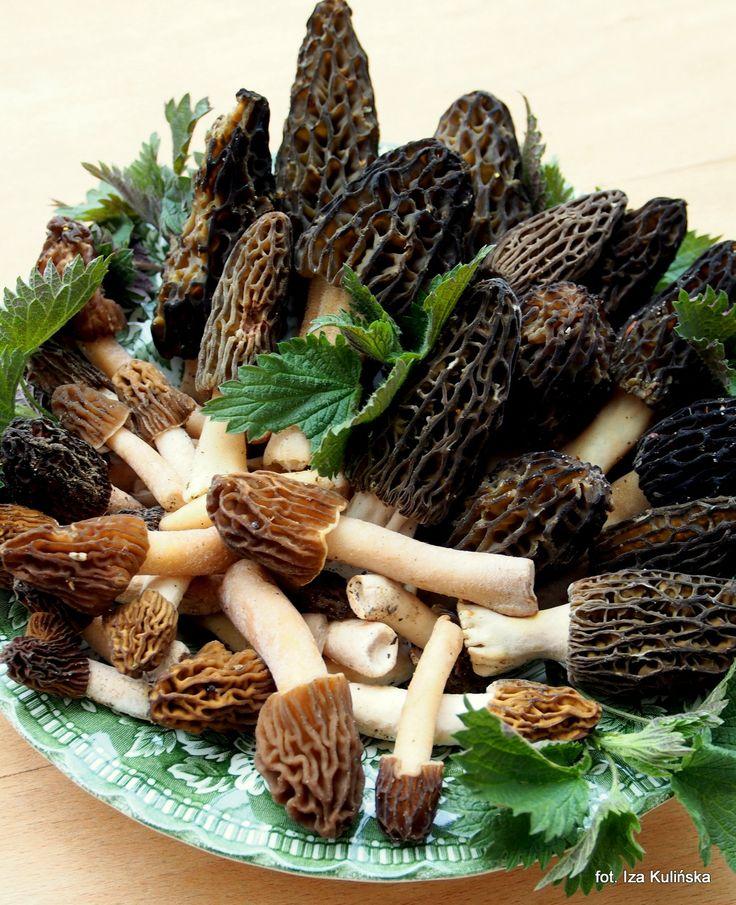 Smaczna Pyza: Smardze, wiosenne grzyby. Co przygotować ze smardzów?