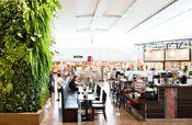 Plantwall in restaurant, food retail. Vertical garden, groen wand, Pflanzenwand