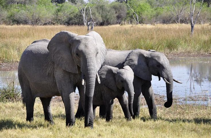 #elephant #elephants #herd #wildlife #nature #moms #weareallconnected #weareone #mothernature #motherearth #pachamama #pachaspajamas #family #love
