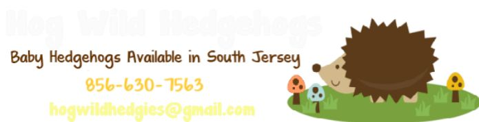 Hog Wild Hedgehogs - Baby Hedgehogs For Sale in South Jersey - Home
