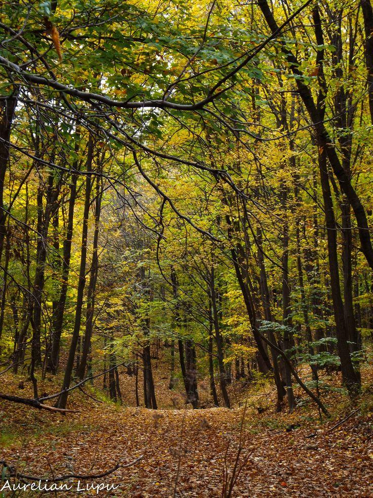 Autumn dream by Aurelian Lupu on 500px
