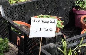 AAMbeienplant... Ongelooflijk!