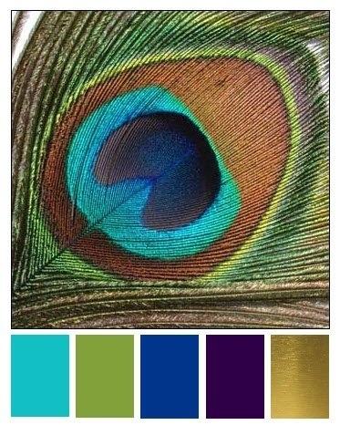 Colour Chart For Peacock Colours Peacock Color Scheme