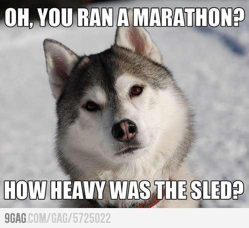 thoughtful Husky
