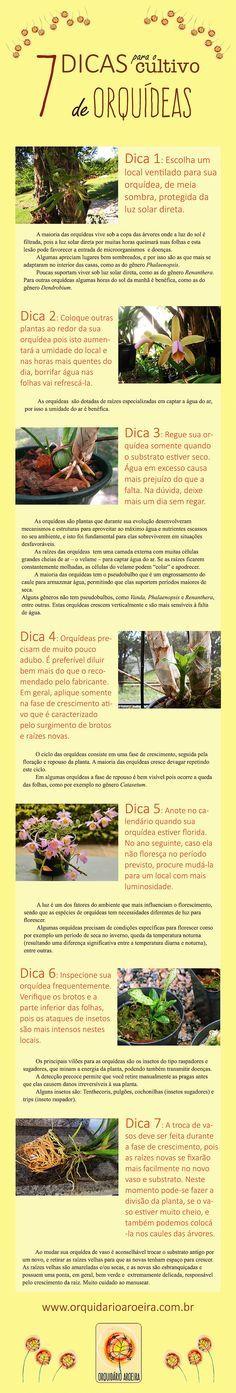 Dicas para o cultivo de orquídeas.