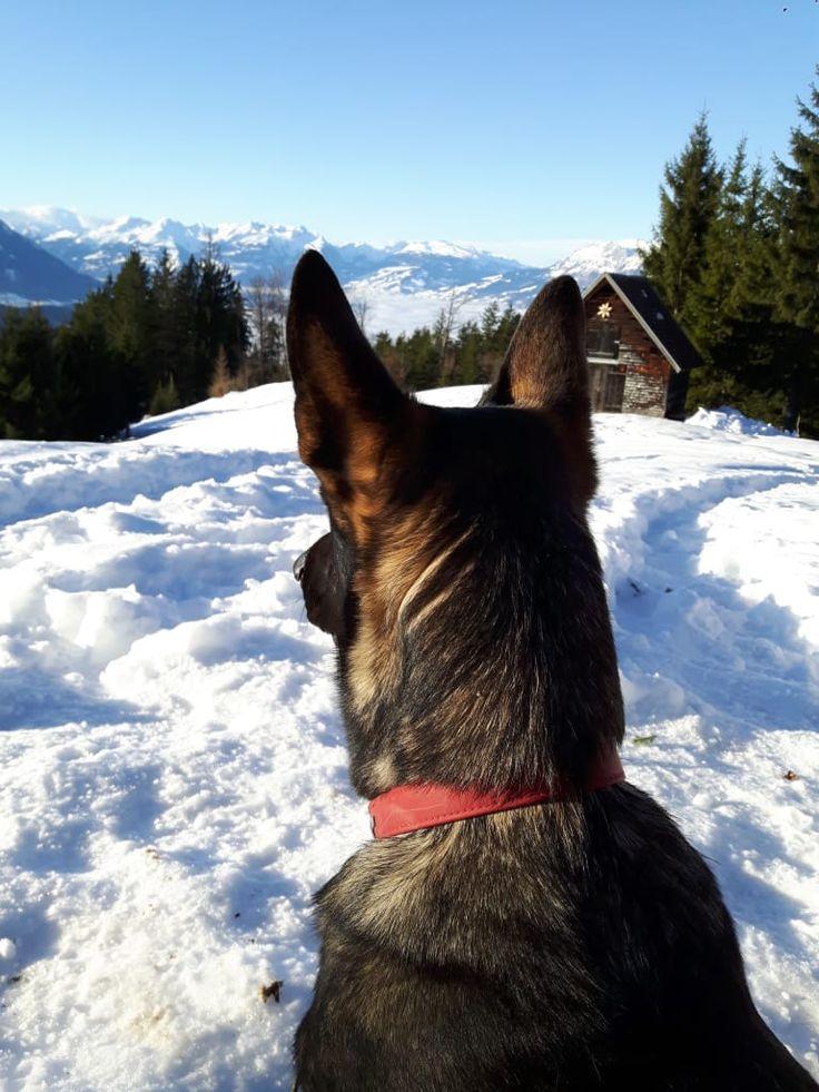 """Hunde Foto: Tanja und Shakira - """" Schöner Ausblick """" Hier Dein Bild hochladen: http://ichliebehunde.com/hund-des-tages  #hund #hunde #hundebild #hundebilder #dog #dogs #dogfun  #dogpic #dogpictures"""