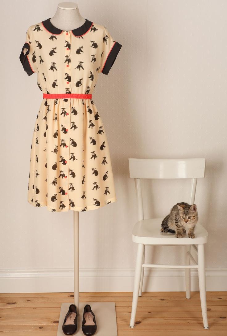 lazzari  #cats