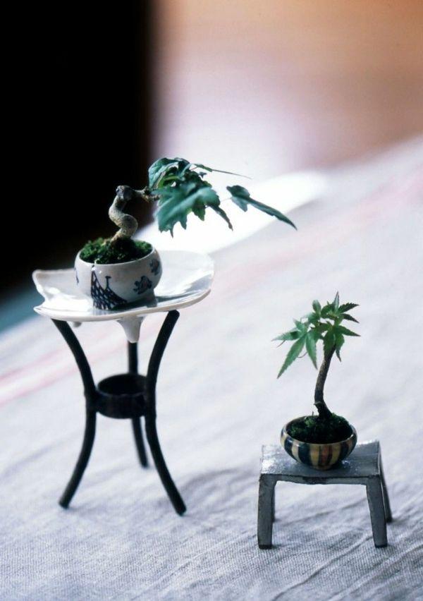 Best ausgefallene deko pflanzen mini bonsai baum