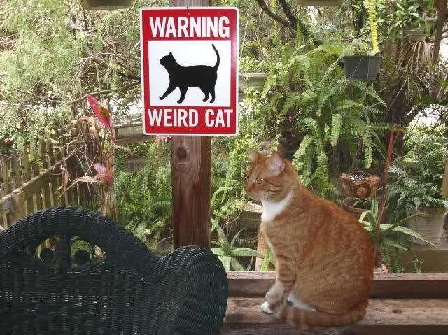 Define weird!