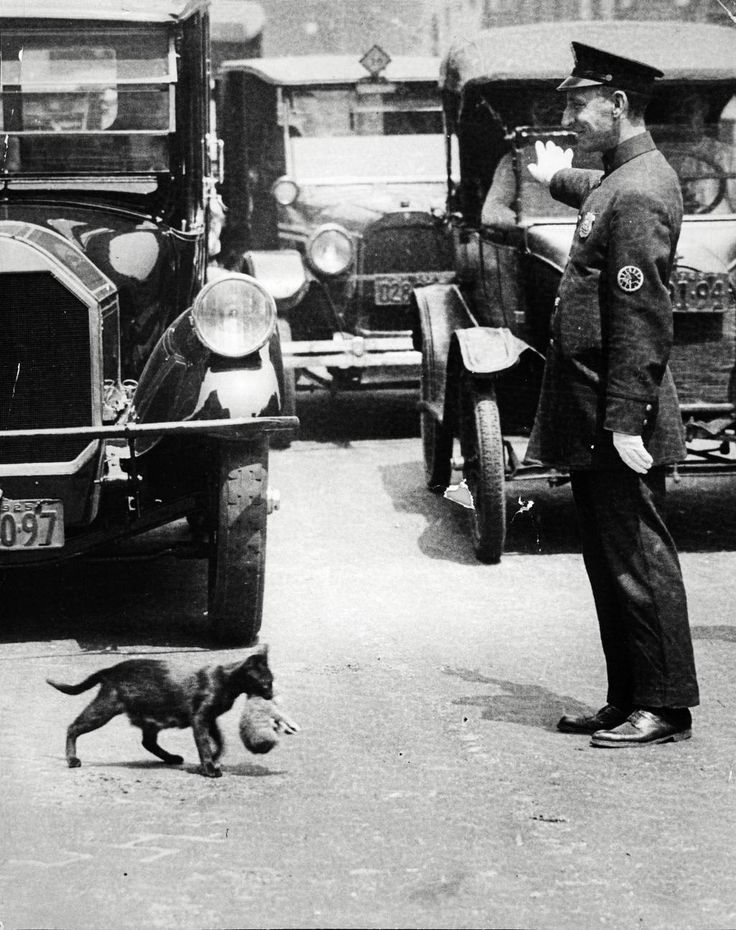 A policeman stops traffic to allow a mother cat to carry her kittens across Centre Street, New York, July 25, 1925