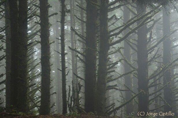En la costa de Oregon