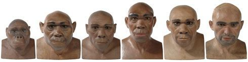 late homo erectus 1human evolution early human species  Human Evolution: Homo Erectus / Homo Ergaster