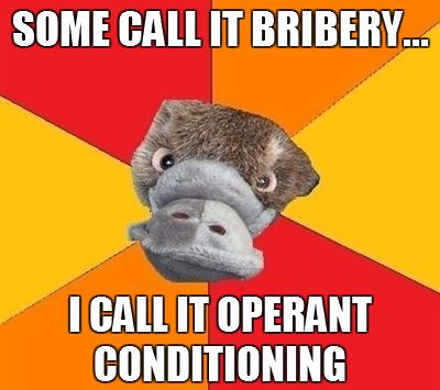 Some call it bribery...I call it operant conditioning