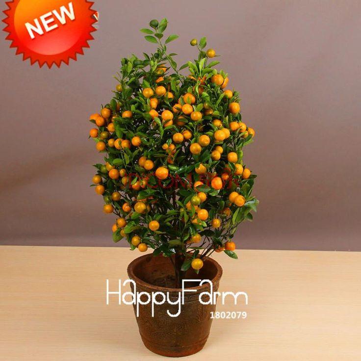 Best 20+ Patio Fruit Trees Ideas On Pinterest | Gardening, Fruit Garden And  Growing Vegetables Indoors