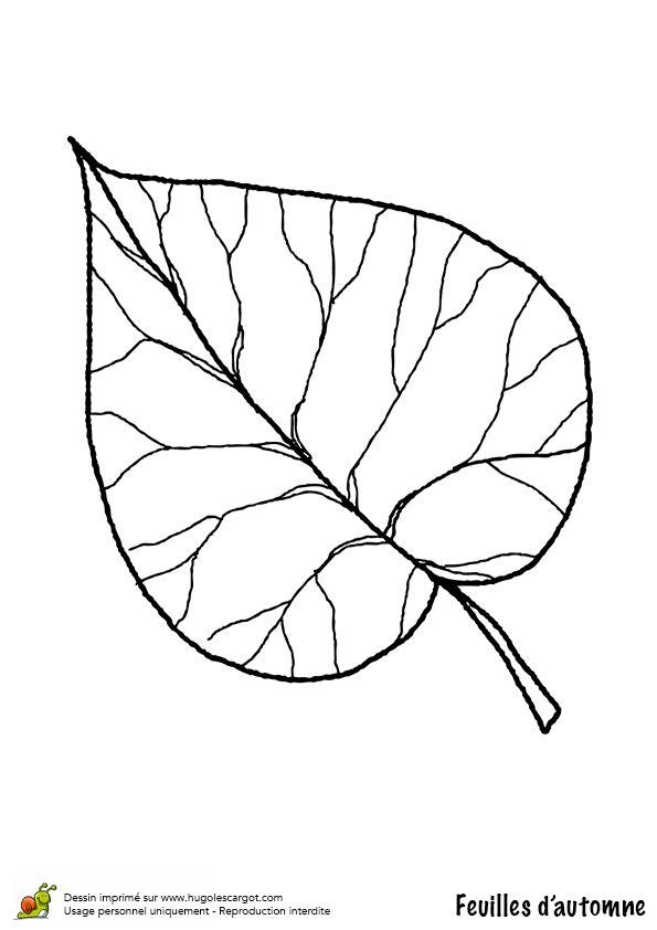 Coloriage / dessin feuilles automne limetier