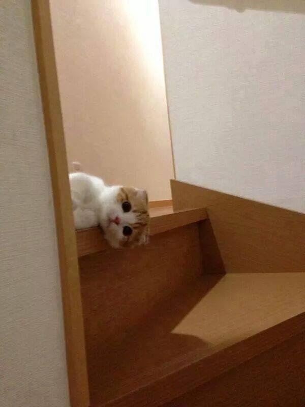 Hi! Wot cha doin'?