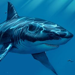 Sharks 101 on pinterest shark activities life cycles and videos
