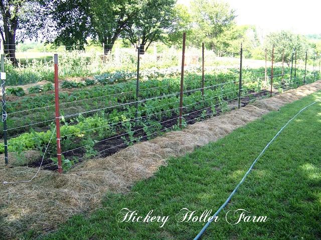 Deep Mulch Gardening , 873 Best Garden Shade Flowers Ve Ables Images On Pinterest