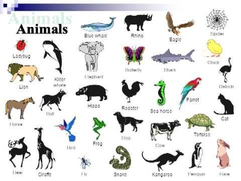 English vocabulary animals - YouTube