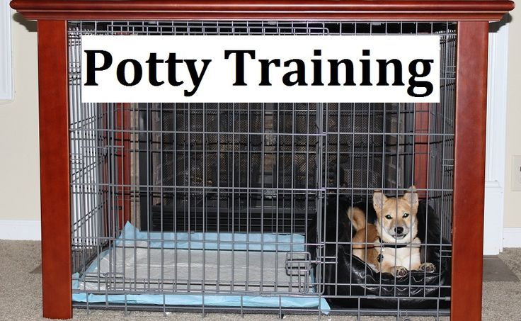 Shiba Inu Puppies. How To Potty Train A Shiba Inu Puppy. Shiba Inu House Training Tips. Housebreaking Shiba Inu Puppies Fast & Easy. Share this Pin with anyone needing to potty train a Shiba Inu Puppy. Click on this link to watch our FREE world-famous video at ModernPuppies.com