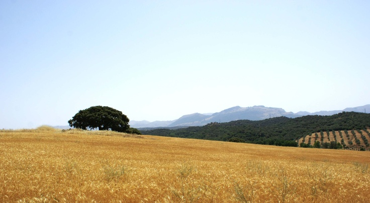 Paisaje mediterráneo en verano
