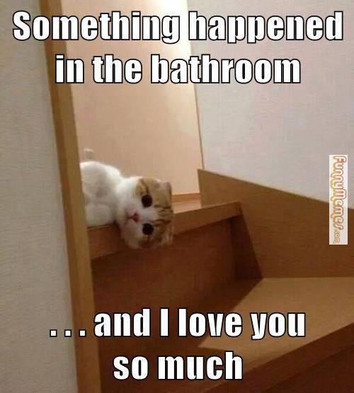 25 best images about bathroom memes on pinterest toilets for Bathroom jokes