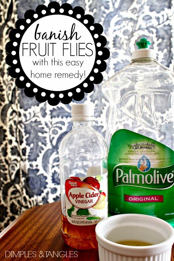 home remedies for fruit flies simple fruit salad