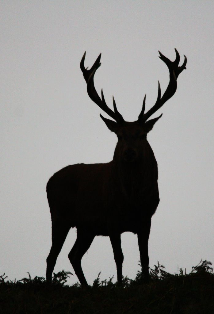 Red Deer Silhouette