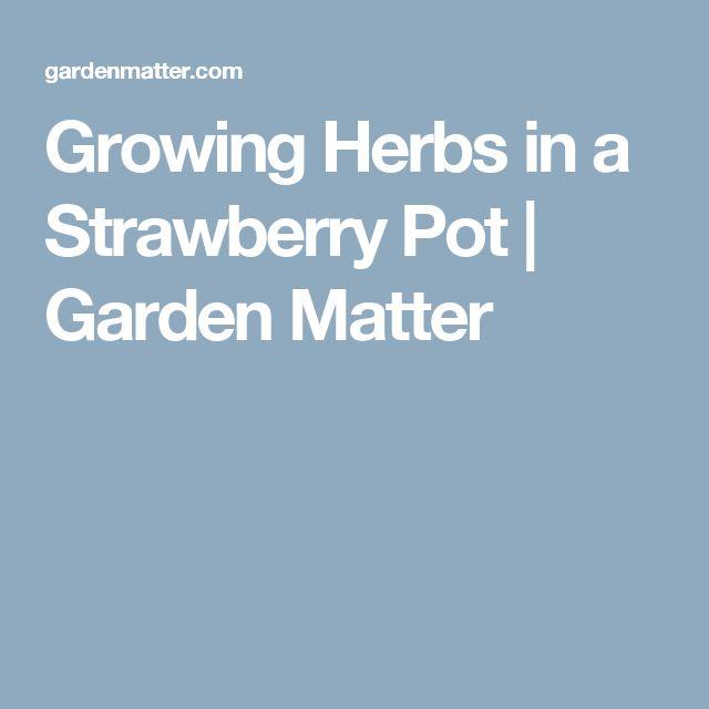 Growing Herbs in a Strawberry Pot | Garden Matter