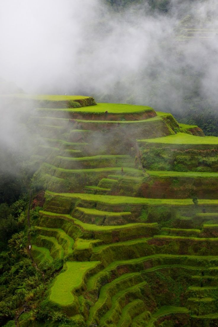 Staircase to Heaven (One of the lovely rice terraces in Banaue, the Philippines)