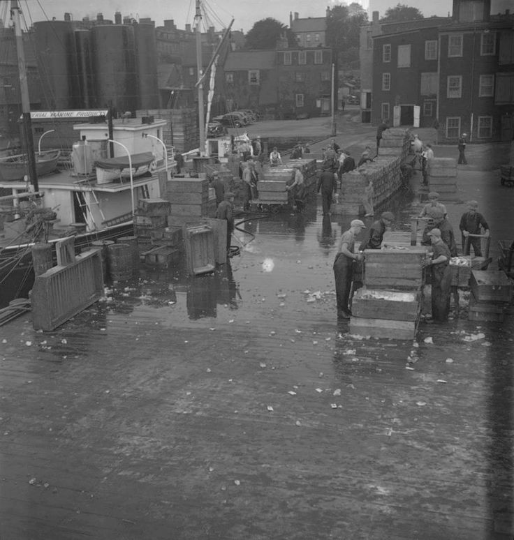 Hommes d'Halifax nettoyant des poissons, vers 1939-1951  Source : http://collectionscanada.gc.ca/pam_archives/index.php?fuseaction=genitem.displayItem&lang=fre&rec_nbr=4326069