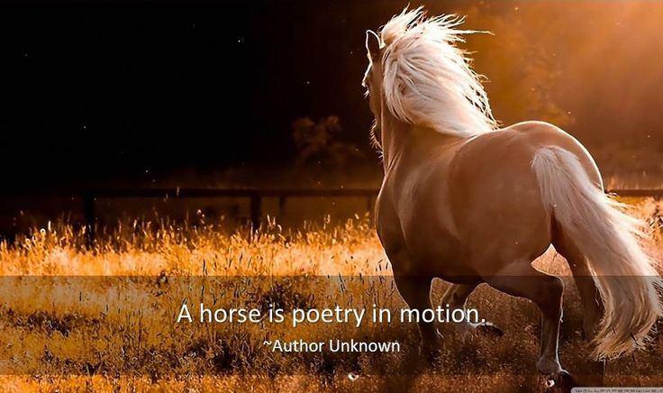 Horse Quotes - Famous Quotes & Quotations about Horses