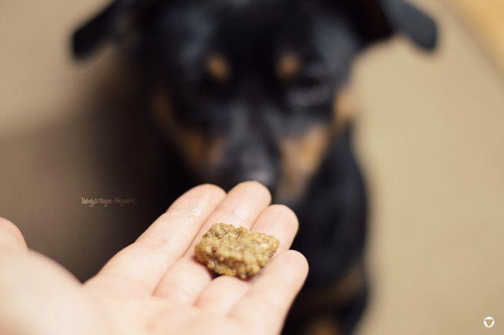 [KRONCH | LÆKKER LAKSE] #leckerli #snacks #hund #PinscherBuddy © Melody M. Bayer Fotografie | BUDDY&ME