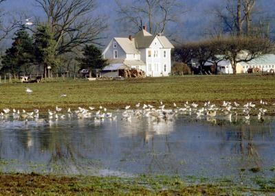 How to maintain a farm pond farm pond farming and pond for Farm pond maintenance