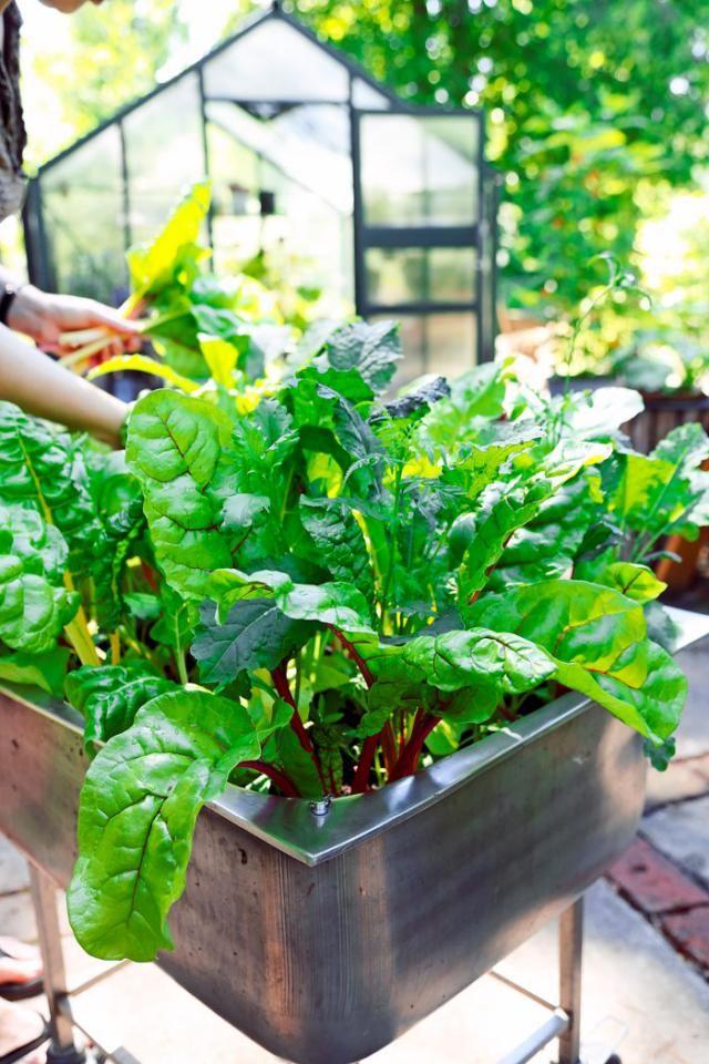 Tee pieni kasvimaa teräsaltaaseen. | Viherpiha