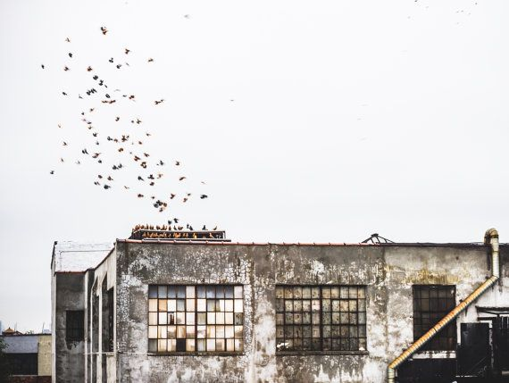 Winter in Brooklyn, Urban Industrial Fine Art Photograph, Birds Flying Over Warehouse in Brooklyn New York, Contemporary Art Print
