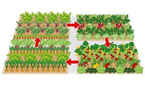 Beet 1: Brokkoli, Rote Bete, Radieschen, Buschbohnen. Beet 2: Erbsen, Kopf-, Pflück- und Schnittsalate. Beet 3: Tomaten, Paprika, Zucchini, Eissalat, Basilikum. Beet 4: Möhren, Zwiebeln, rotstieliger Mangold und Buschbohnen